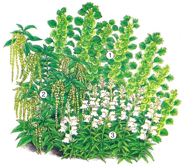 Бело-зеленая элегантная клумба