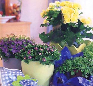 Зимний уход за комнатными растениями