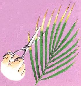 Обрезка коников листьев