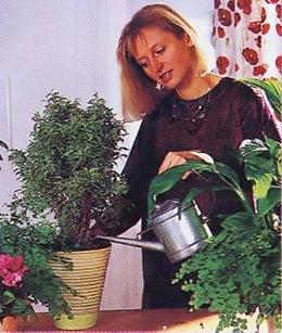 Зимний полив комнатных растений