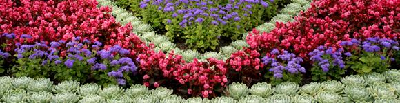Рабатка | Любимые цветы