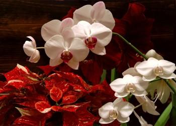 Цветущие зимой под новый год цветы