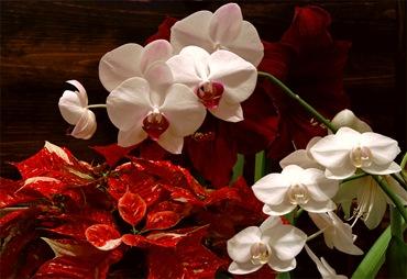 Цветущие зимой цветы