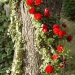Как вьющиеся растения взбираются по опоре