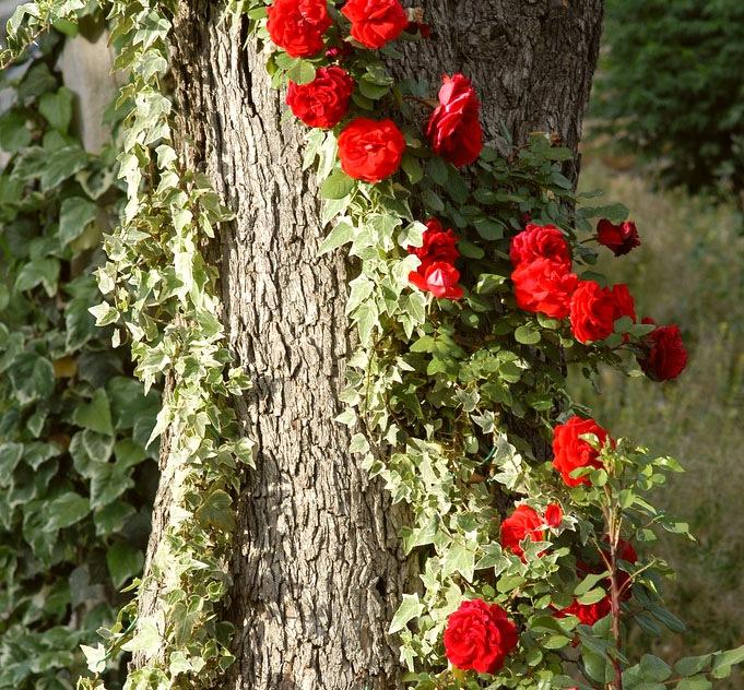 Вьющиеся растения и опоры для них