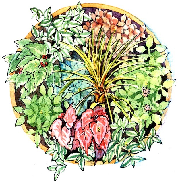 Композиция из комнатных растений в горшке