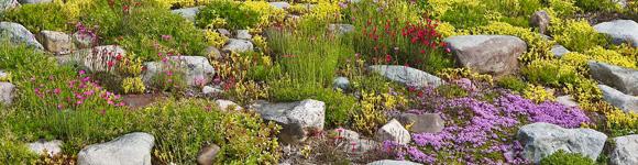 Почвопокровные растения, низкорослые цветы, ковровый цветник