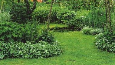 Зеленчук в саду