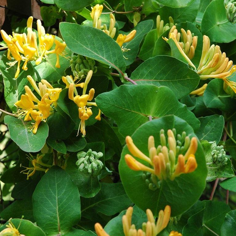 Как вьющиеся растения взбираются по