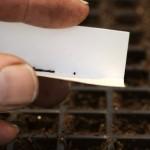 Посадка однолетников – как сажать мелкие семена