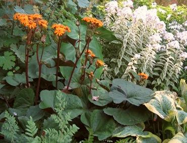 Высокие садовые цветы