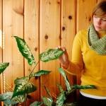 Комнатные растения – простые и сложные