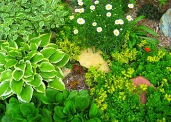Миниатюрные садовые композиции